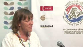 CBD COP11: Forest forensics will bring illegal loggers justice