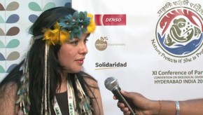 CBD COP11: Climate change is a critical issue for indigenous peoples