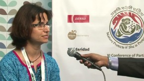 CBD COP11: Indigenous rights are a focus for biodiversity NGOs